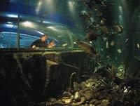 Aquarium of the Lakes