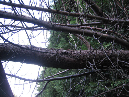 The huge branch that landed on Mike's caravan