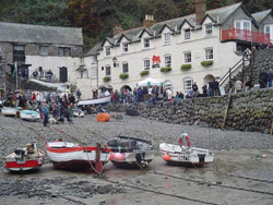 Clovelly-Herring