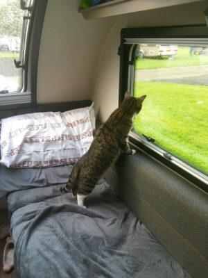 Cat in caravan