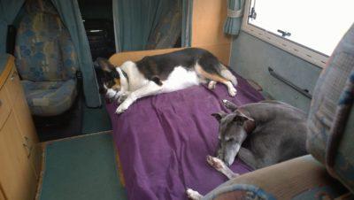 Dogs asleep in motorhome
